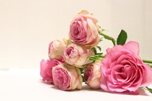 横向きピンクのバラ