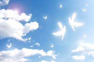 空飛ぶ鳥たち